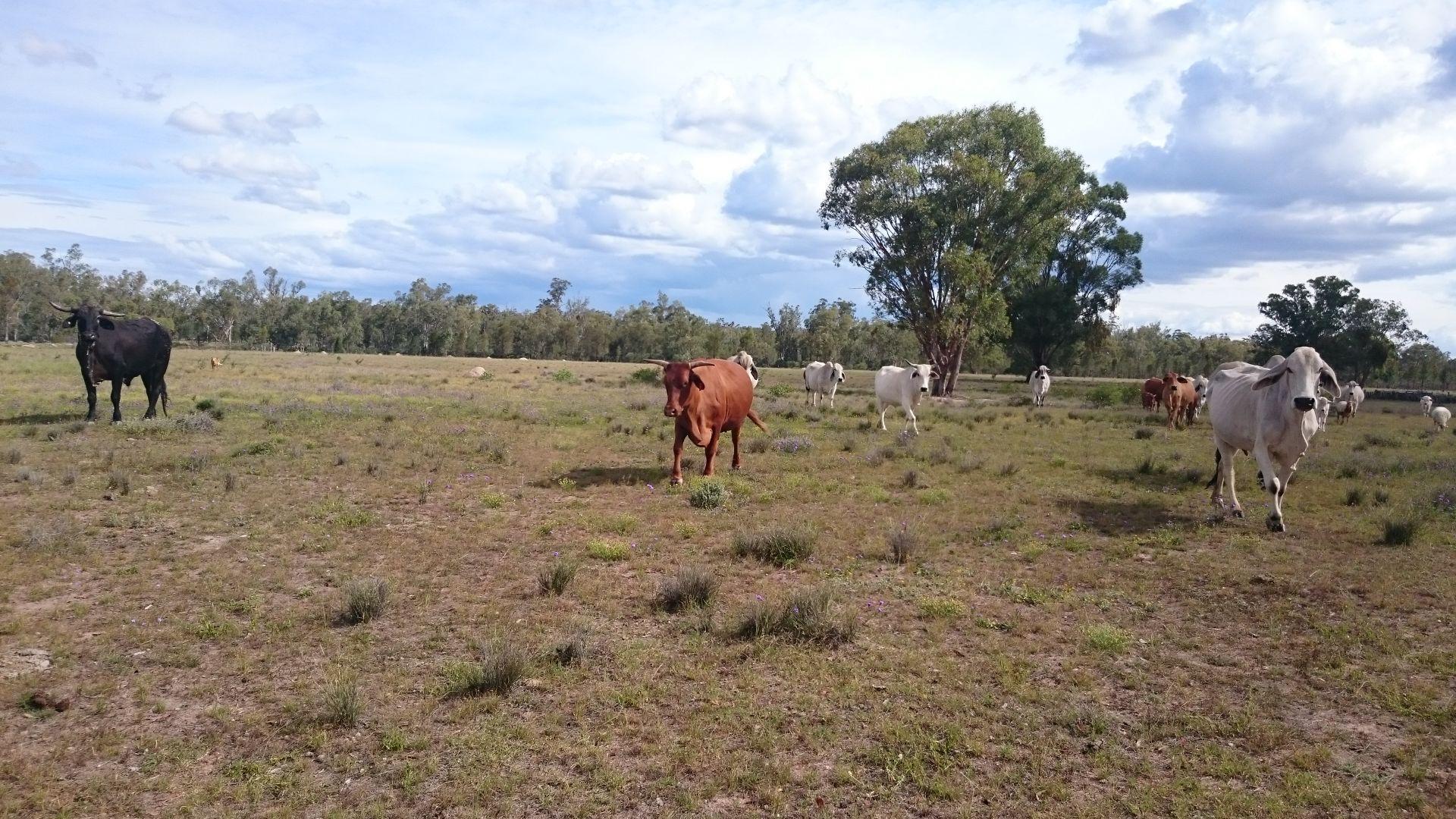 Limevale-Greenup Rd, Coolmunda QLD 4387, Image 0