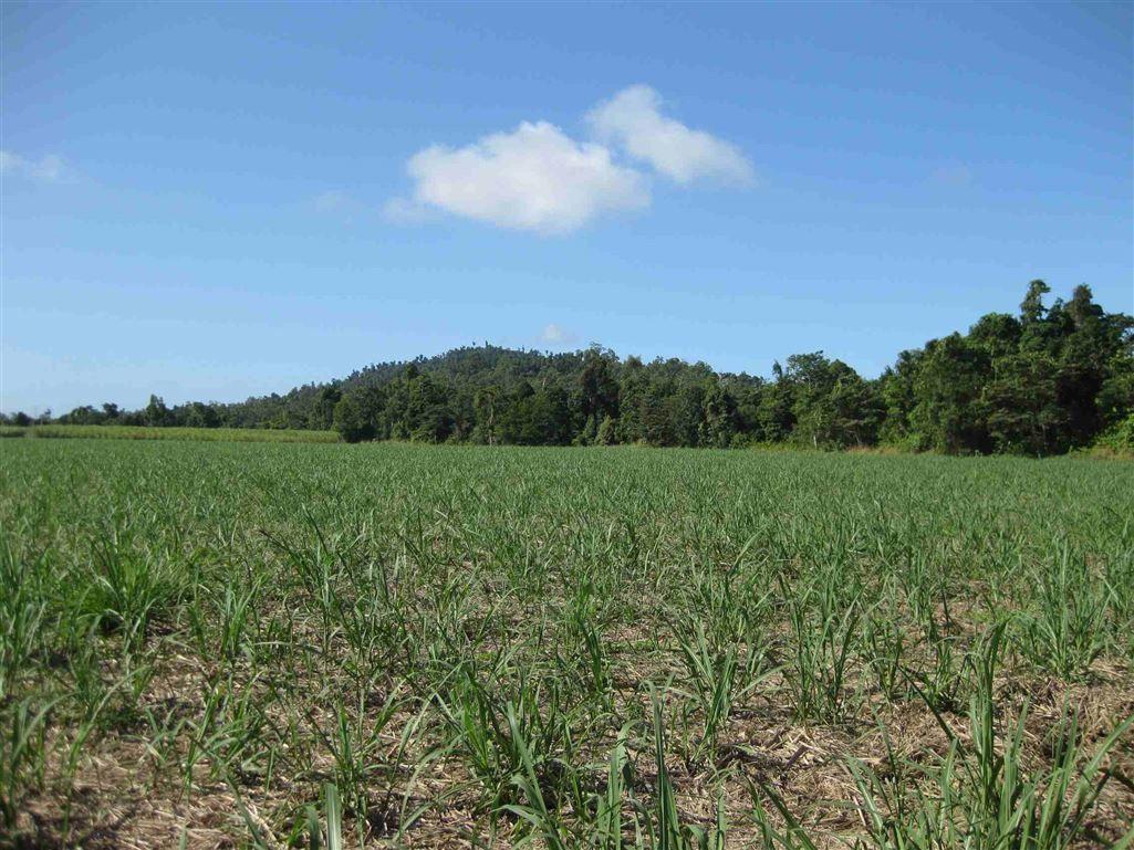 0 Granadilla Road, Granadilla QLD 4855, Image 0