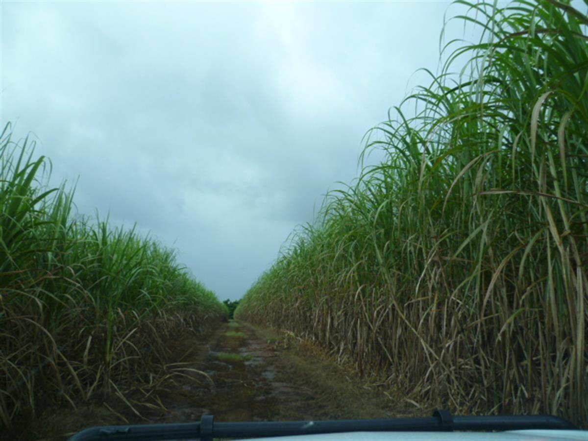 2098 Innisfail Japoon Road, Bombeeta QLD 4871, Image 2