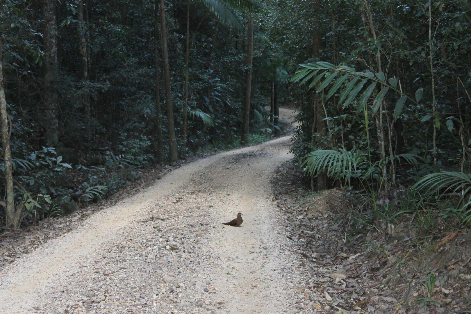 Lot 2 MOUNT WARNING ROAD, Mount Warning NSW 2484, Image 2