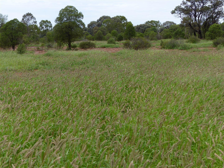 """""""Idaylia"""" 5129 Warrego Highway, Mungallala QLD 4467, Image 1"""