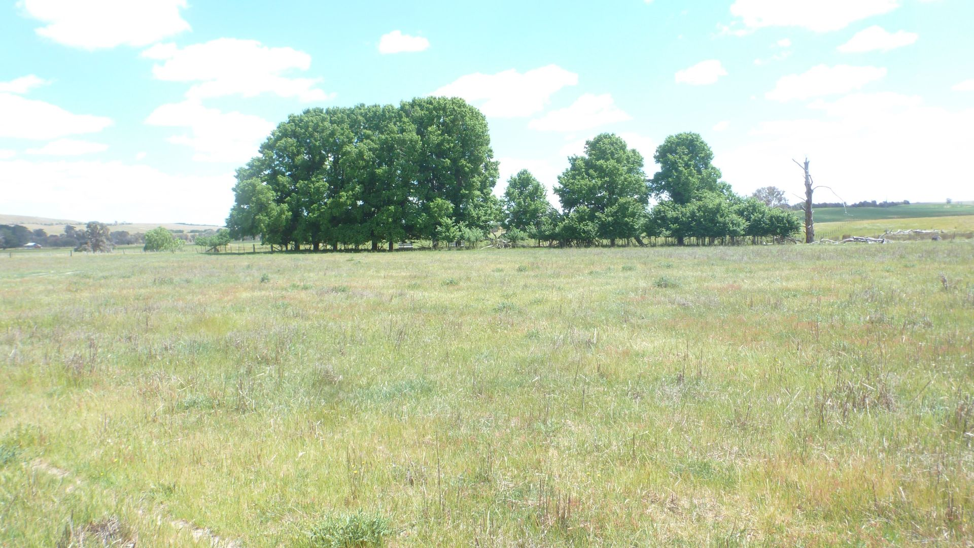 894 Little Plains Road, Boorowa NSW 2586, Image 1