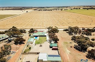 Picture of 35 Cliff Road, Roseworthy SA 5371