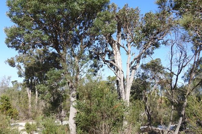 Picture of Lot 21 Chambers Road, CARBUNUP RIVER WA 6280