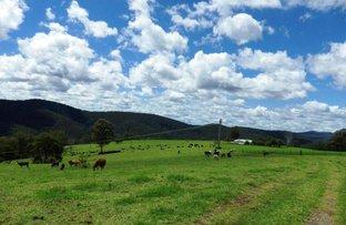 Picture of 116 Mollydale  Road, Dorrigo NSW 2453