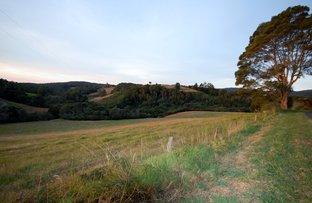 397 Slingsbys Road, Dorrigo NSW 2453