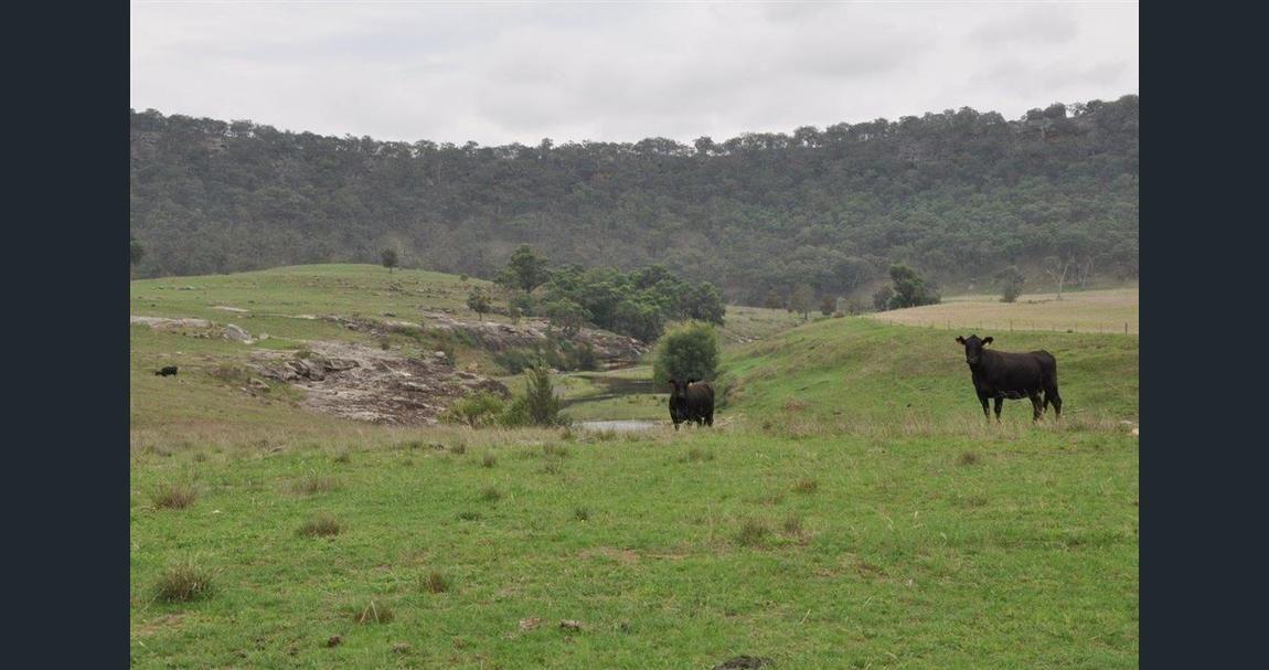 via 497 HULKS ROAD, Merriwa NSW 2329, Image 2