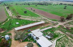 Picture of 8 Safe Road, Koroop VIC 3579