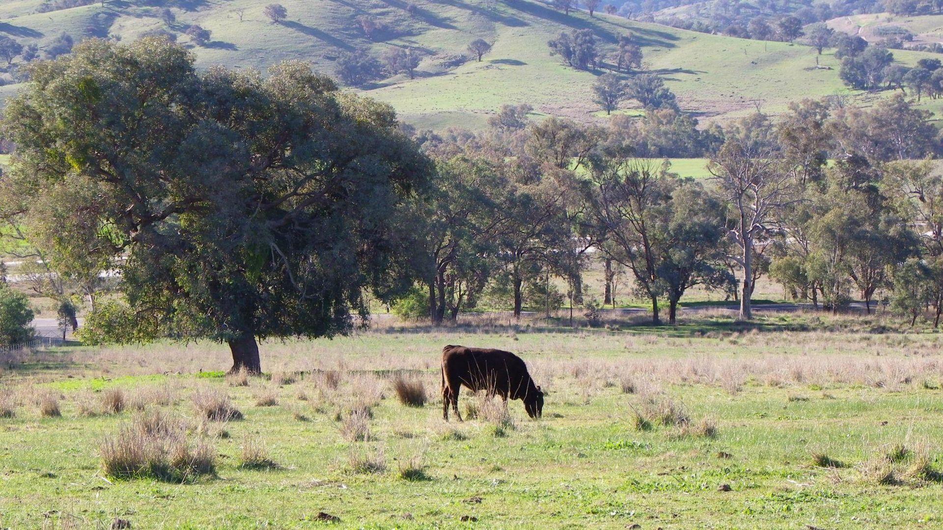 Woomargama NSW 2644, Image 2