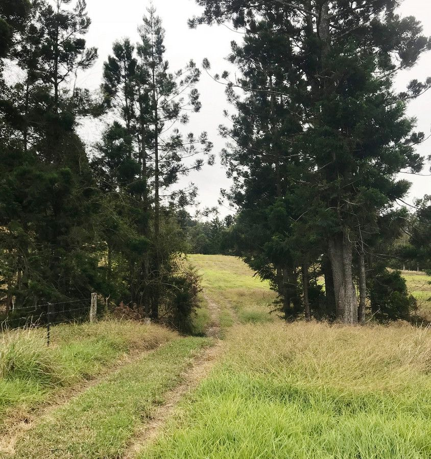 2294 Nerang-Murwillumbah Road, Numinbah Valley QLD 4211, Image 2