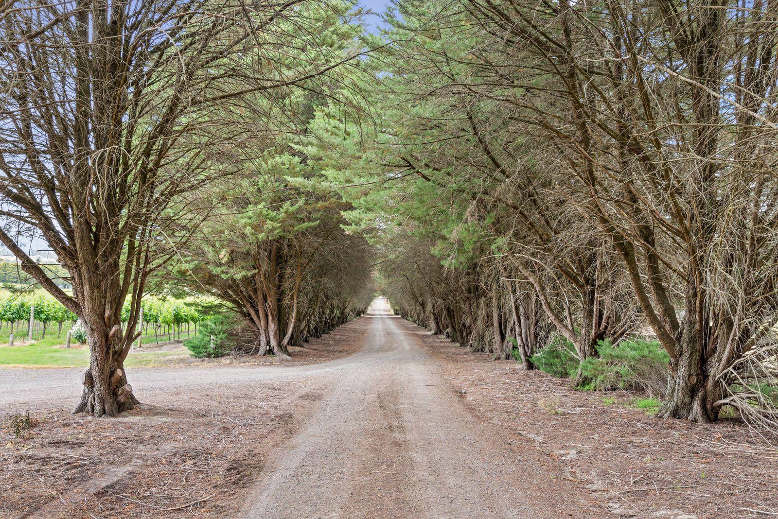 843 Old Toolangi-Dixons Creek Road, Dixons Creek VIC 3775, Image 2