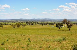 Picture of 343 Puggoon Road, Gulgong NSW 2852