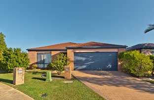 Picture of 16 Eucalypt Place, Bracken Ridge QLD 4017
