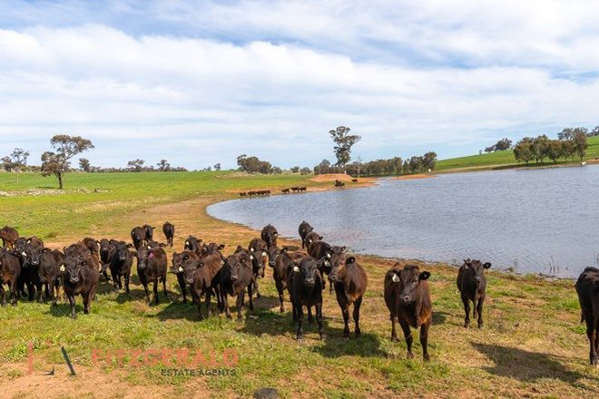 Picture of 128 Norah Creek  Road, MOLONG NSW 2866
