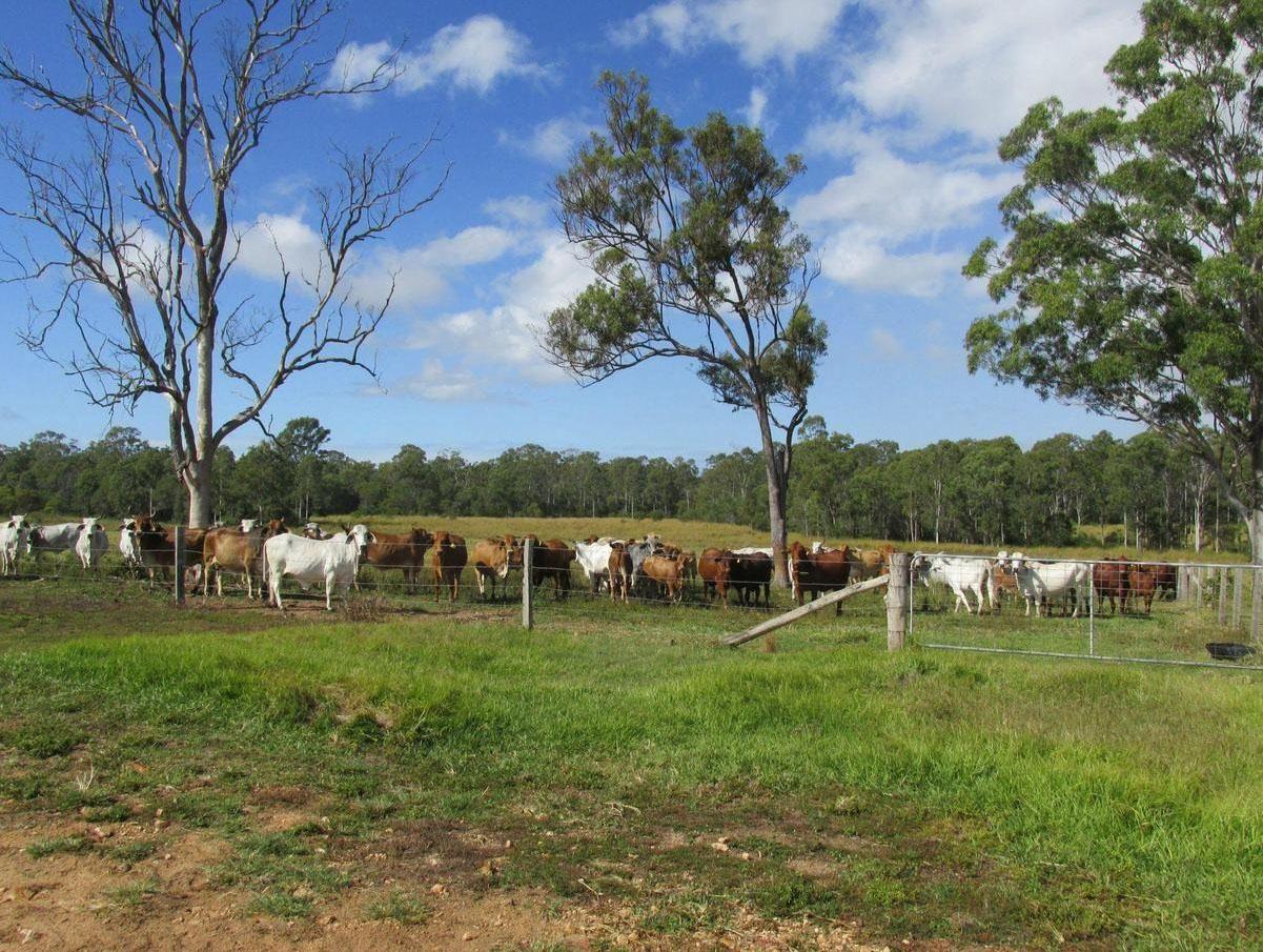 2898 Rosedale Road, Yandaran QLD 4673, Image 0
