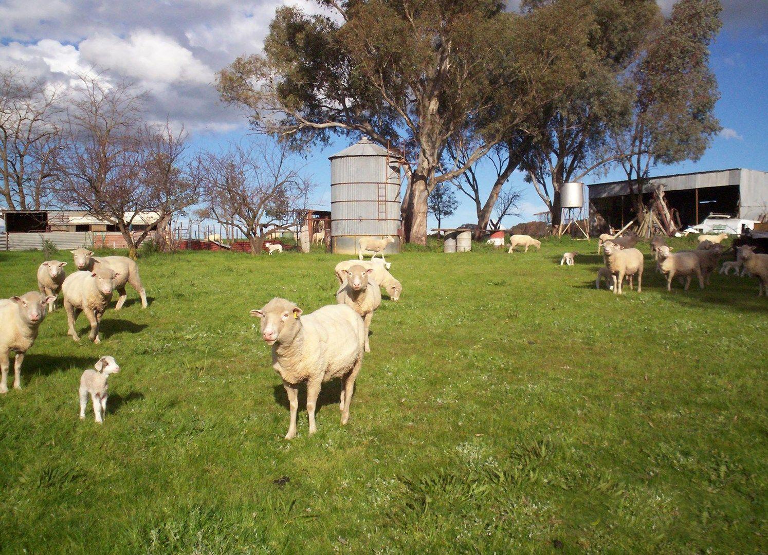 57 Mahers, Cookardinia NSW 2650, Image 0