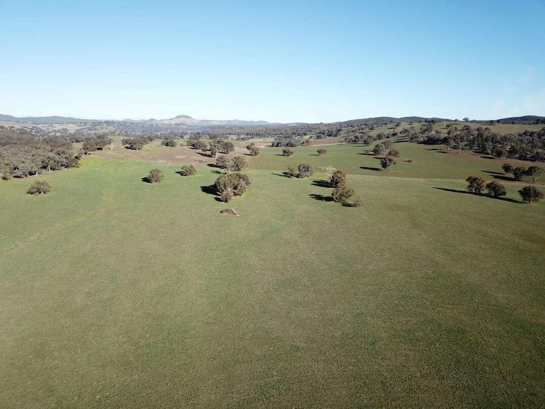 1380 Brawlin Rd, Cootamundra NSW 2590, Image 2