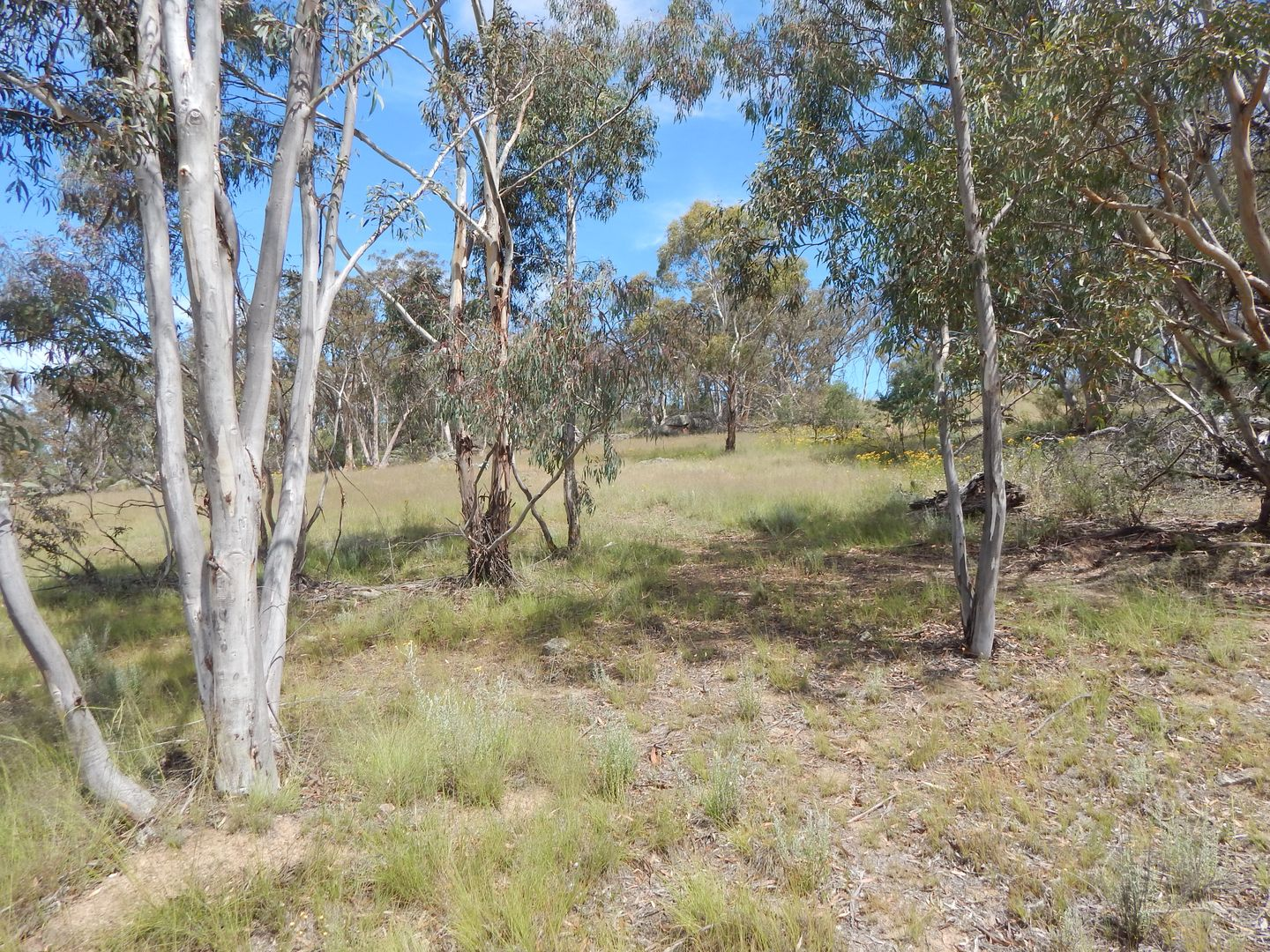 Lots 1 & 2 Old Dry Plains Rd, Cooma NSW 2630, Image 2
