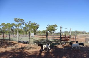 "Picture of . ""Boocenbury"" & ""Playboy"", Charleville QLD 4470"