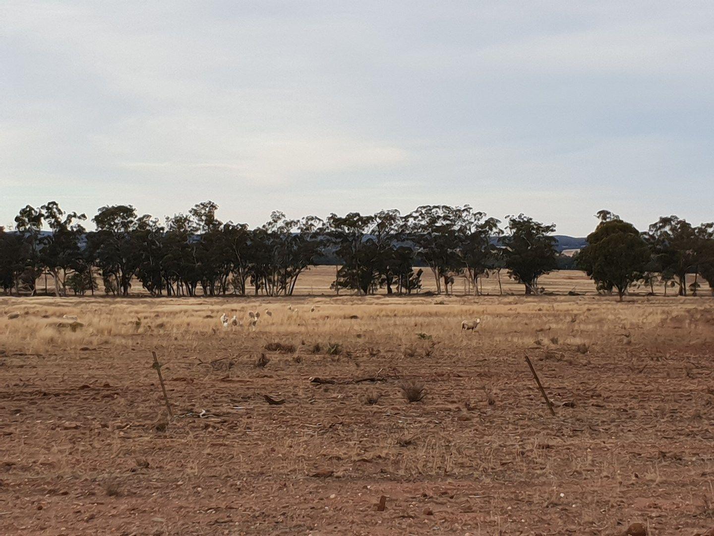Fox Dale, Gilgandra NSW 2827, Image 0
