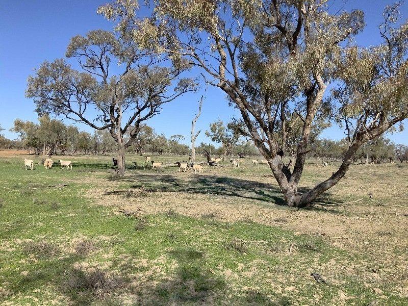 . Barrygowan, Mintaka & Dunsandle, Cunnamulla QLD 4490, Image 2