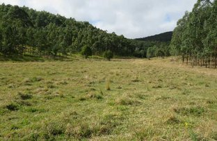 Picture of Lot 2 Clarence Way, Urbenville NSW 2475