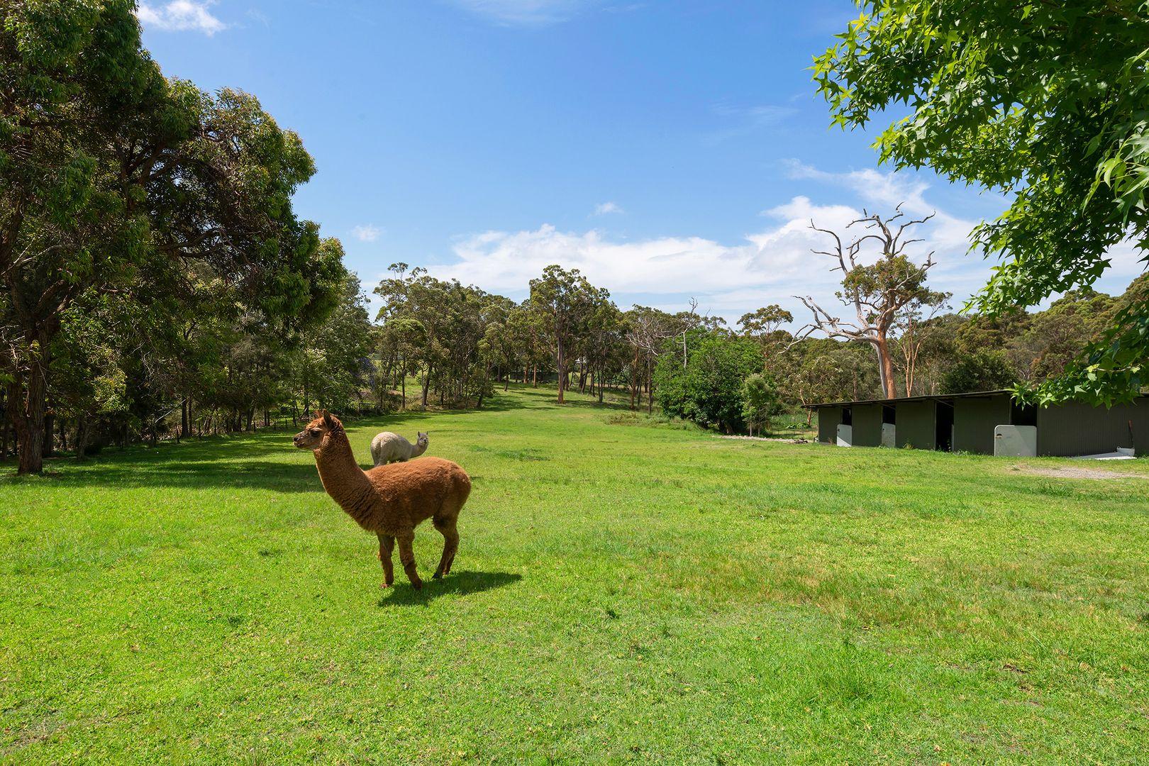 99 Violet Town Road, Floraville NSW 2280, Image 0