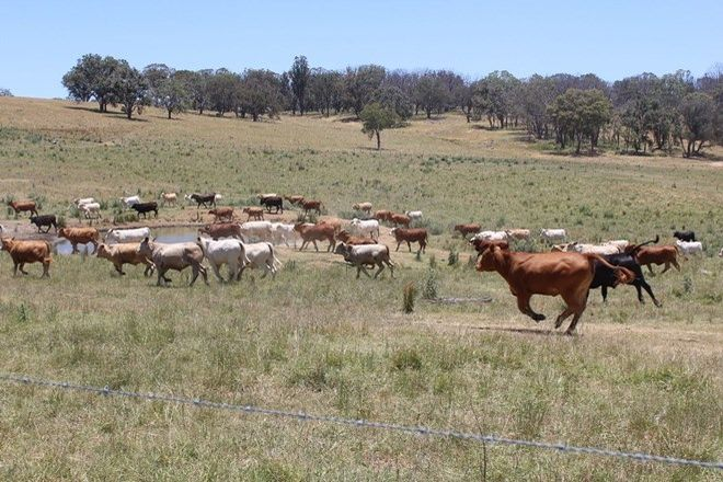 """Picture of """"Ramah"""", GUYRA NSW 2365"""