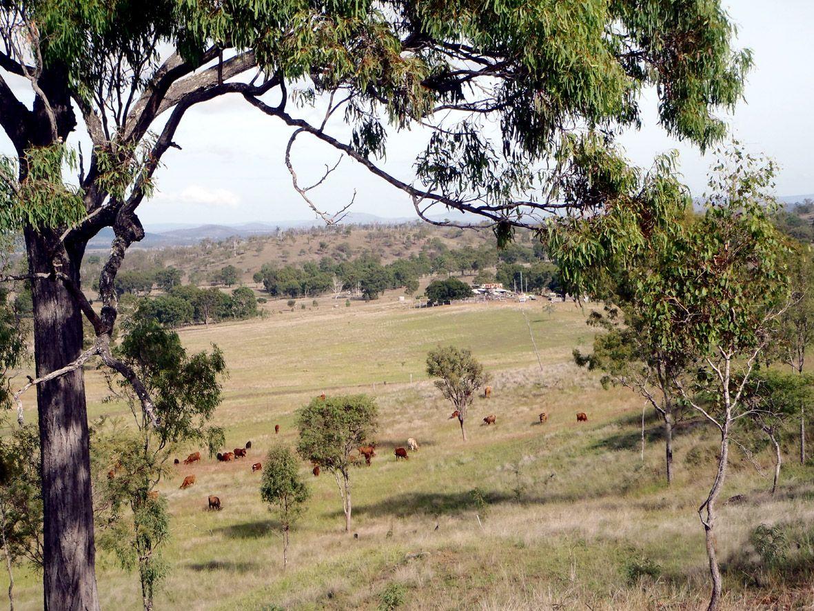 325 CHRISTENSENS ROAD, Gooroolba QLD 4625, Image 0