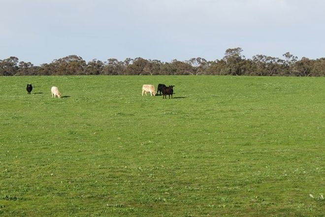 Picture of Lot 60 Cobb Highway, PRETTY PINE NSW 2710