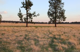 Picture of Mid Western  Highway, West Wyalong NSW 2671