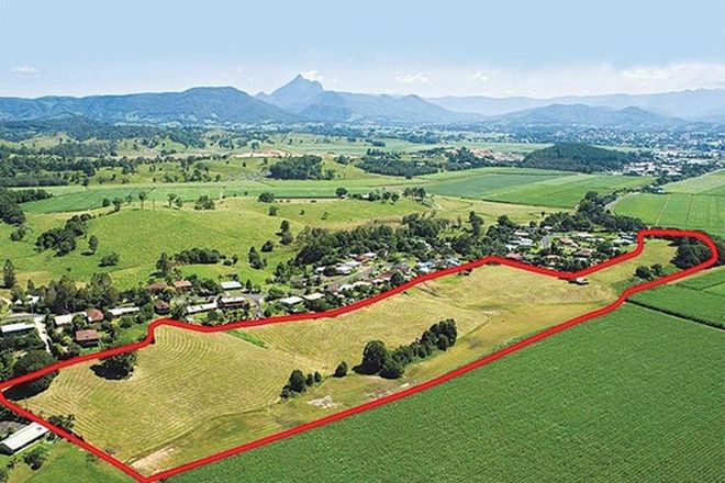 Picture of 59 Reserve Creek Road, SOUTH MURWILLUMBAH NSW 2484