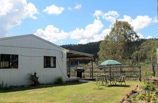 Picture of 319 Blackhorse Creek Road - Eden Creek, Kyogle NSW 2474