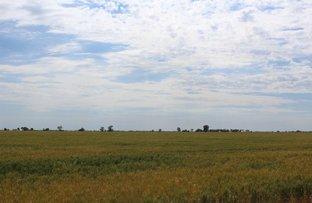 """"""" Part Kyona"""", Moree NSW 2400"""
