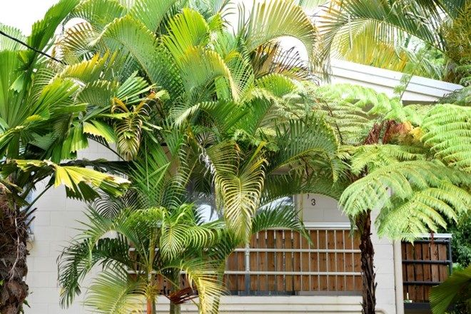 Picture of 3/3 Donkin Lane, MISSION BEACH QLD 4852
