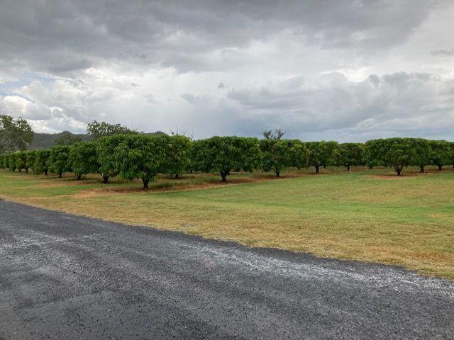 Schincariol Road, Dimbulah QLD 4872, Image 0