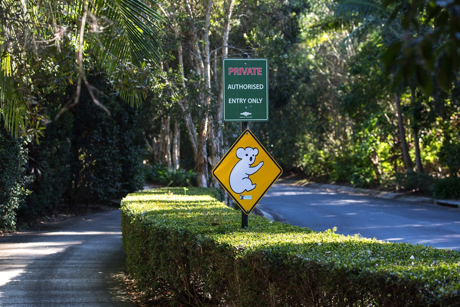 Lot 21 Oasis Drive, Noosa Springs QLD 4567, Image 1