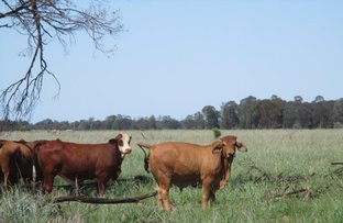 Picture of 1280 ACRES CATTLE GRAZING, Chinchilla QLD 4413