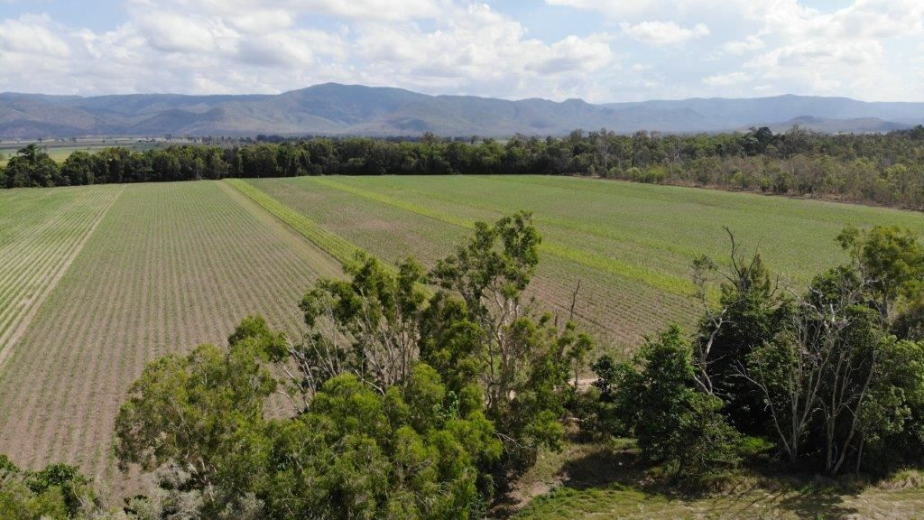 99 Pattis Road, Helens Hill QLD 4850, Image 1