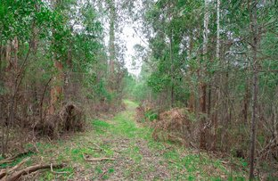 Picture of 1232 Maroondah Highway, Narbethong VIC 3778