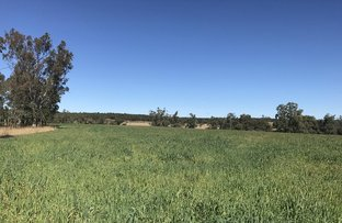 Picture of 3261 Gragin Road, Warialda NSW 2402