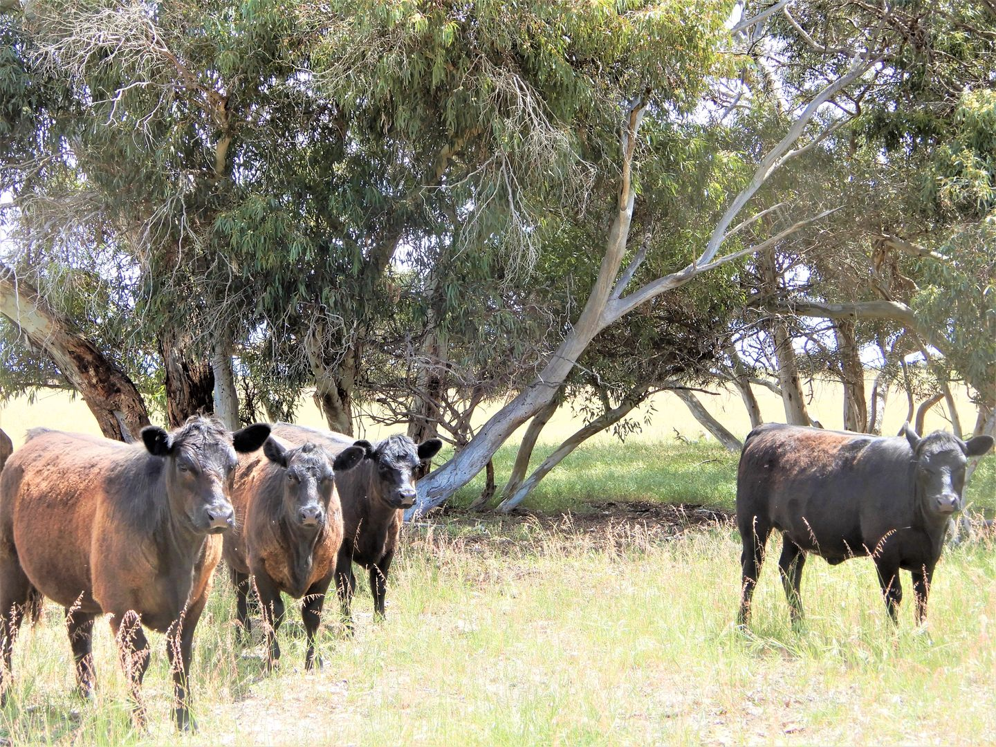 Section 73 Venning Road, Coonalpyn SA 5265, Image 0