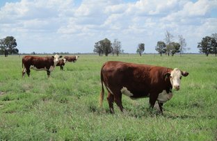Picture of 1265 ACRES BRIGALOW COUNTRY, Tara QLD 4421