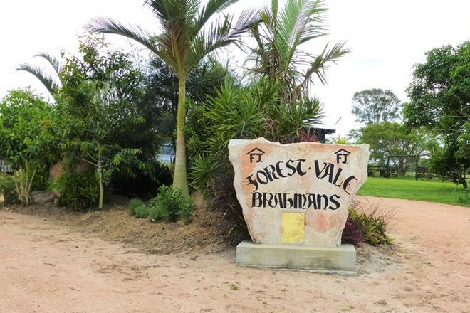 Picture of 1272 Fingerboard Road, MOUNT TOM QLD 4677