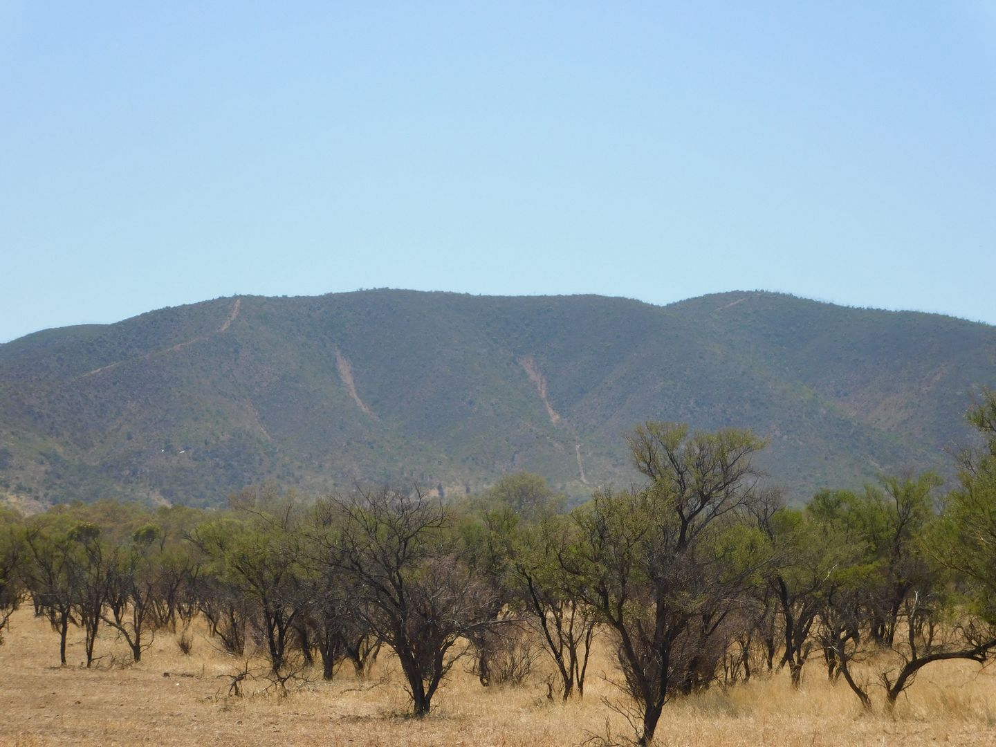 Lot 155 Gulf View Road, Napperby SA 5540, Image 0