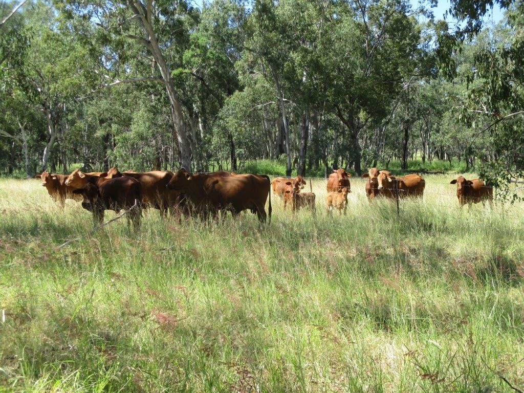 2519 ACRES GRAZING PROPERTY, Dulacca QLD 4425, Image 0