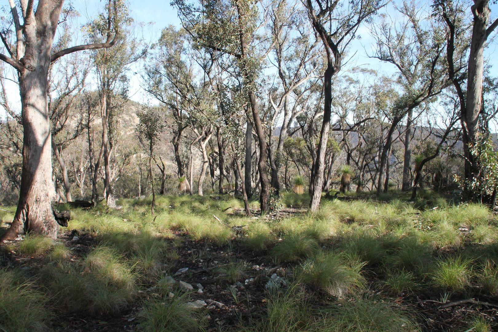 Lot 24 Bluff Creek Road, Tenterfield NSW 2372, Image 2