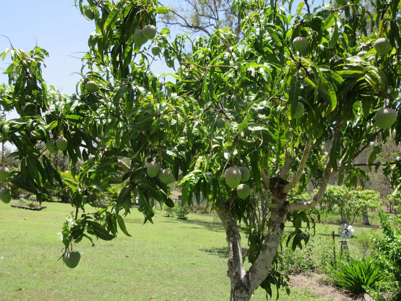 95 Monduran Rd, Yandaran QLD 4673, Image 2