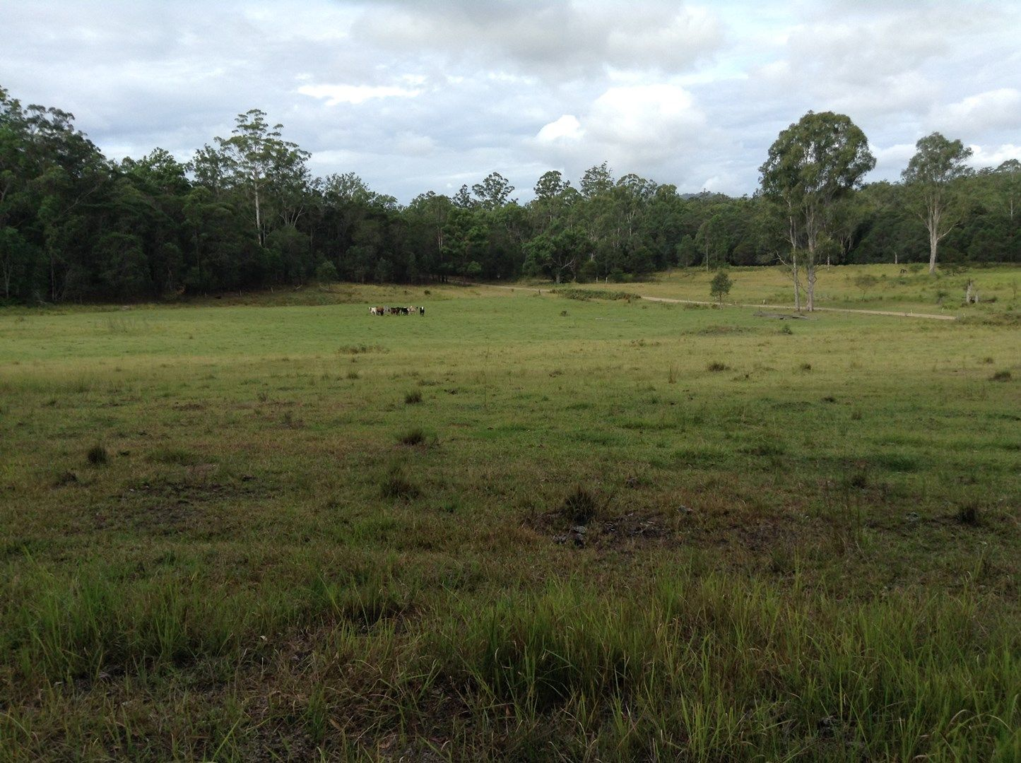 Lot 53 Upper Fine Flower Rd, Upper Fine Flower NSW 2460, Image 0