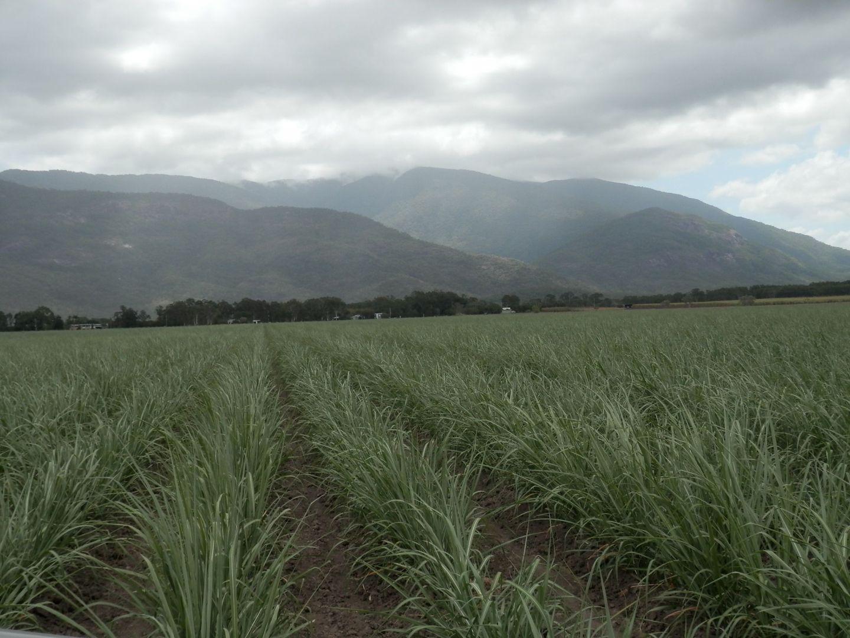 152 Piralko  Road, Mount Surround QLD 4809, Image 2